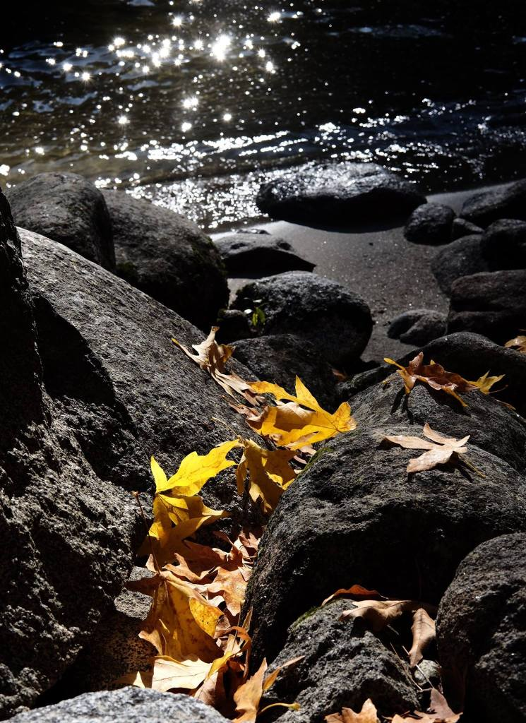 2016-10-22-leaves-on-the-shore-of-icicle-creek
